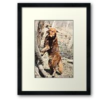 What Do You Mean Dogs Can't Climb Trees? -11 Framed Print
