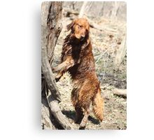What Do You Mean Dogs Can't Climb Trees? -11 Canvas Print