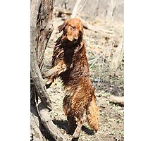 What Do You Mean Dogs Can't Climb Trees? -11 Photographic Print
