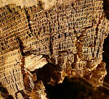 Dried bark close-up by contradirony