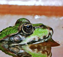 """""""Chives""""  The Star Frog summer in all its forms   13 (c)(h) by Olao-Olavia / Okaio Créations   fz 200 by Okaio - Olivier Caillaud"""