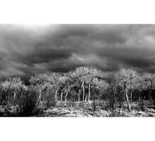 Black and White Bosque Photographic Print