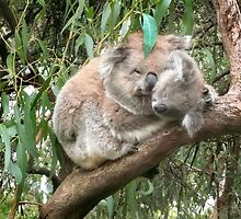 Koala bear mother and baby by Roz McQuillan