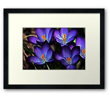 First Gift of Spring Framed Print