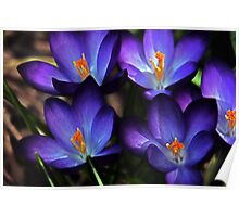 First Gift of Spring Poster