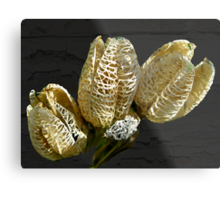 Dried Lily Seed Pods Metal Print