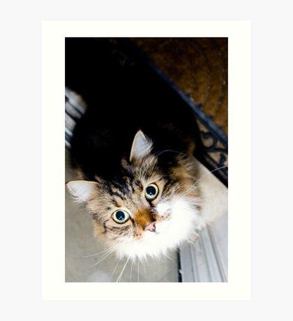 'Playful cat' Art Print