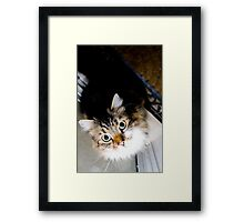 'Playful cat' Framed Print