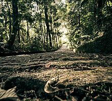 Forest Path  by Glauco Meneghelli