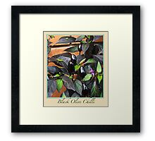 Black Olive Chilli - Chilli Collection #2 Framed Print