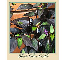 Black Olive Chilli - Chilli Collection #2 Photographic Print