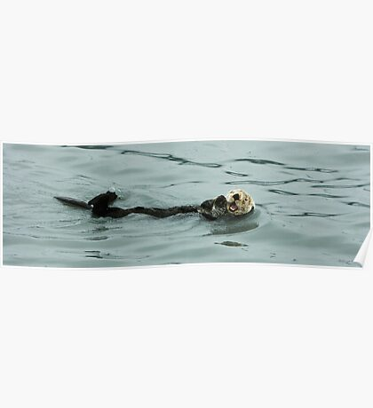 Sea Otter - Alaska  Poster