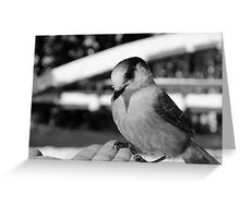 First Contact Black and White Greeting Card