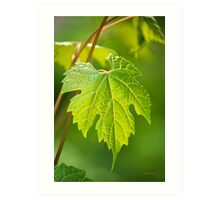 Green Leaf Fox Grape Art Print