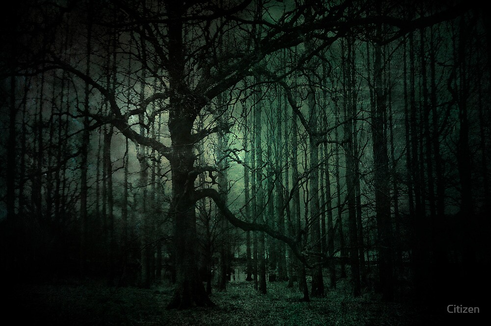 Emerald Forest by Nikki Smith