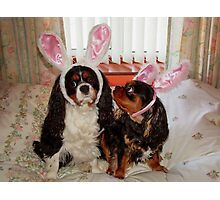 My Easter Bunnies !!! Photographic Print