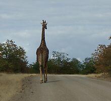 A walk down the road by Steven Conrad