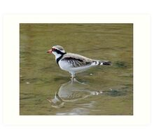 Black-Fronted Dotterel Art Print