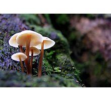 Fungus, Mount Field, Tasmania Photographic Print
