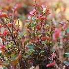 Beautiful miniature shrub by MuhammadAther