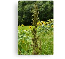 In the Tall Grass She Stood the Tallest Canvas Print