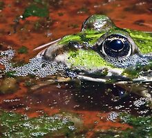 """""""Chives"""" The Star Frog summer in all its forms 2 (c)(h) by Olao-Olavia / Okaio Créations fz  200 by Okaio - Olivier Caillaud"""