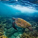 Turtle at Hono Aunau by Flux Photography