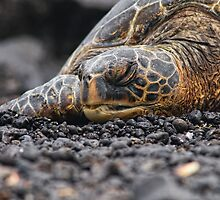 Turtle taking a nap by Flux Photography