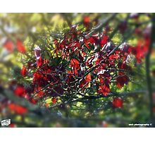 Red & Green Photographic Print
