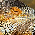 Lazy Daze Iguana by tigerwings