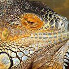 Lazy Daze Iguana by tigerwings