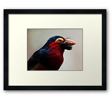 Black Beard the Pirate, Err...Bird. Framed Print