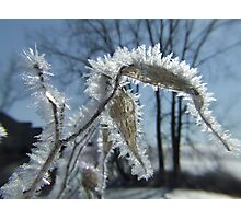 Hoarfrost in Michigan, late Winter Photographic Print