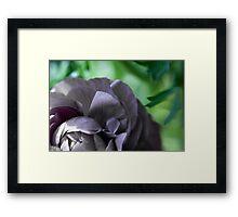 Floral Aperture Framed Print
