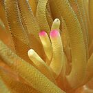 Sea Anemone Macro by Leon Heyns