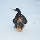 Prancing About The Snow by daphsam