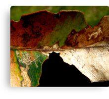 Leaf... Canvas Print