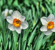 Spring is Here by Rick  Friedle