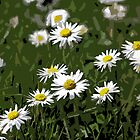 DaisyAbstract by RosiLorz