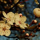 Spring is here! by Themis
