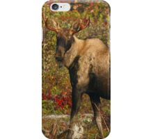 Maine Bull Moose in the fall iPhone Case/Skin