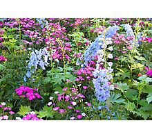 Symphony Of Flowers Photographic Print