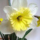 White and yellow by Ana Belaj