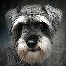 My Friend Bob by Tarrby