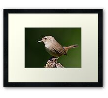 House Wren Framed Print
