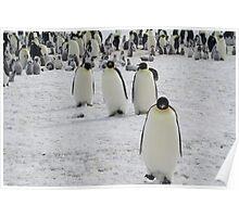 Emperor Penguins at Snow Hill Island, Antarctica 10/10 Poster