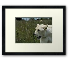 Peaceful Surroundings  Framed Print