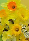 Spring Elegance by NatureGreeting Cards ©ccwri