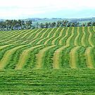 The Truth About Crop Circles - Fields - NZ by AndreaEL