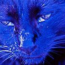 Blue boy by katpartridge